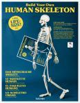 Das menschliche Skelett